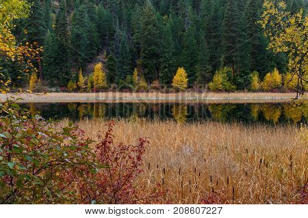 Cattails covering the shoreline of a peaceful mountain lake during the Autumn season.