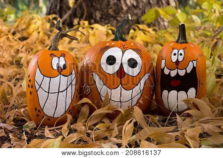 Close up of three decorated pumpkins that are painted with smiles big teeth and oval eyes. Photographed among dried leaves. Shallow depth of field.