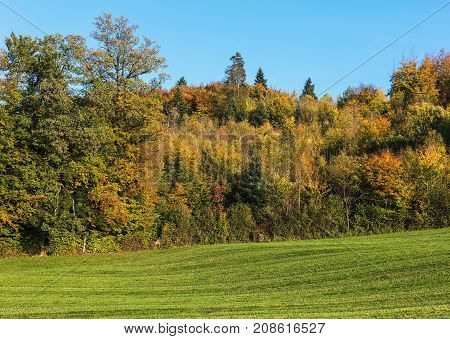 Countryside view in Switzerland in autumn. The picture was taken in the beginning of October, near the village of Ringlikon located on Mt. Uetliberg in the Swiss canton of Zurich.