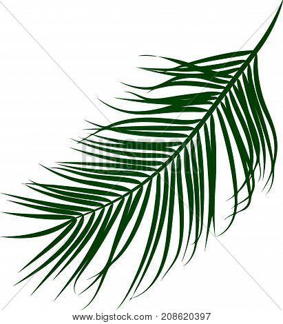 Illustration of palm tree leaf. Green soft gradient transparent background. Png