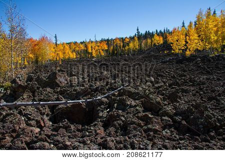 Amazing lava field with various tree types and a fallen branch during the autumn in a brilliant display of colors in Dixie National Forest near Cedar Breaks National Monument.