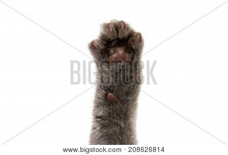 cat's paw relaxation isolated on white background