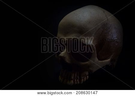 A Still Life Of Skull In To The  Dark Background.