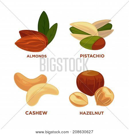 Nut set. Ripe nuts and seeds vector illustration. Various nuts. Highly detailed nut icons almond, pistachio, cashew hazelnut. Vector Illustration.