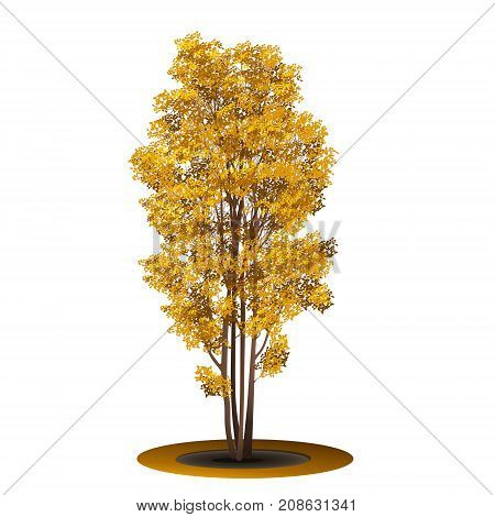 bush with yellow leaves and shadow on white background