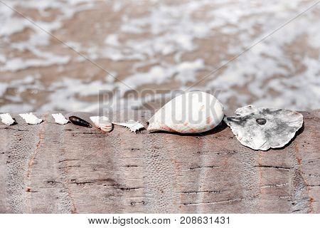 few sea shells lying in a row on palm tree