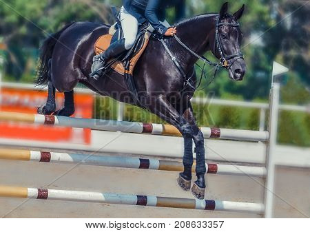 Black dressage horse and rider in uniform performing jump at show jumping competition. Equestrian sport background. Black horse portrait during dressage competition. Selective  focus.