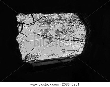 Old abandoned building with the broken roof, trees on the roof and a view of the sky. Black and white image.