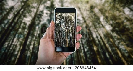 Cropped hand holding smart phone against trees growing in forest