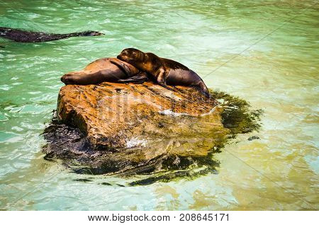 two seals cuddling and resting in sunlight on a rock