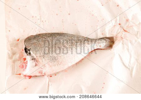 Fresh Dorada Fish Decorated Sea Bream