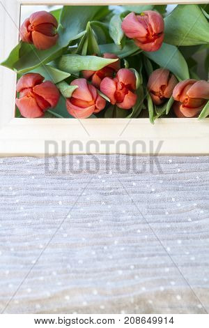 Many fresh red tulips in the wooden frame on light pink background