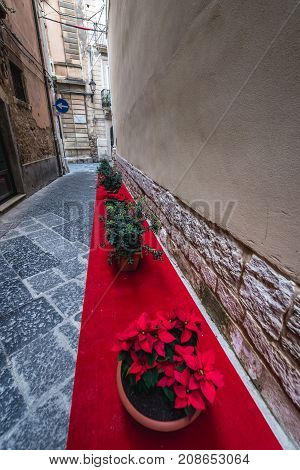 Poinsettia flowers placed on red carpet on Ortygia isle Syracuse city Sicily Island in Italy