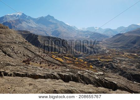 Mountain valley in autumn with yellowed trees at an altitude of 4000 meters near the Muktinath