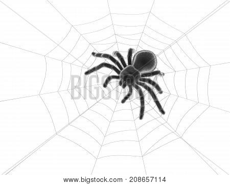 Black spider on spider web on white background. 3D rendering