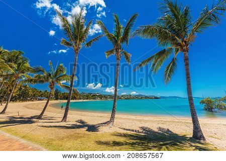 Sunny day on sandy beach with palm trees, Airlie Beach, Whitsundays, Queensland Australia
