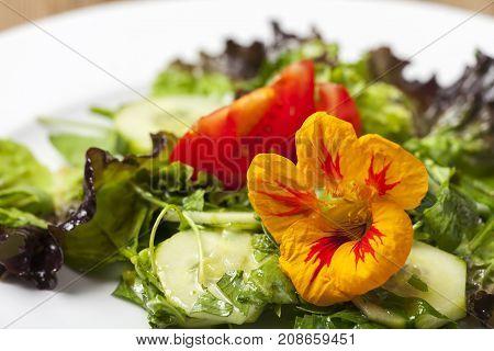 closeup of nasturtium flower on mixed salad