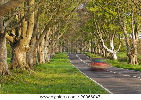 Red Car In The Avenue Of Trees