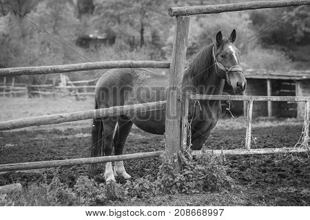 A brown horse stands in the stable a black and white frame