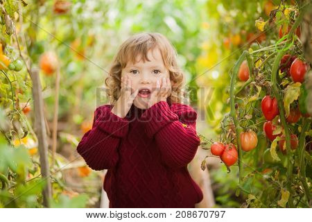 Adorable lad little girle in the greenhouse sick tomato plant Stricken Phytophthora