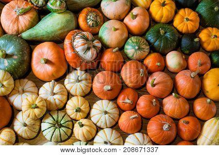 Squashes and pumpkins different varieties. Organic. Closeup.
