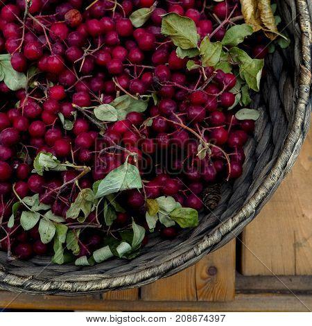 Red Rowan In A Wicker Basket On The Burlap Background