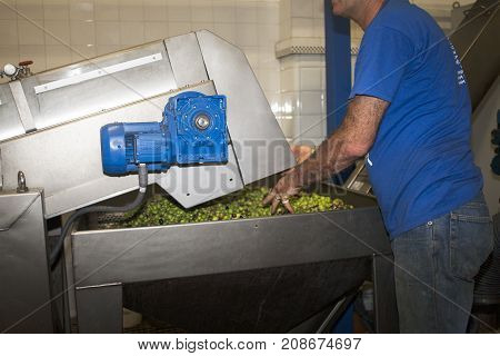 Production of Mediterranean olive oil from Liguria