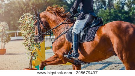 Sorrel dressage horse and rider in uniform performing jump at show jumping competition. Equestrian sport background. Chestnut horse portrait during dressage competition. Selective  focus.