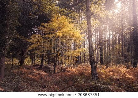 Sunlight shimmering through on autumn woodland enhancing beautiful autumn colours