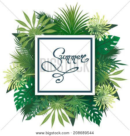 Palm leaves emblem. Palmtree leaves summer label, vector border with palm greens