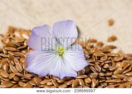 flax seed linseed and flax flower on a linen textile