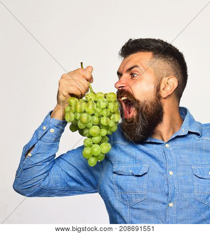Winegrower With Hungry Face Holds Cluster Of Grapes