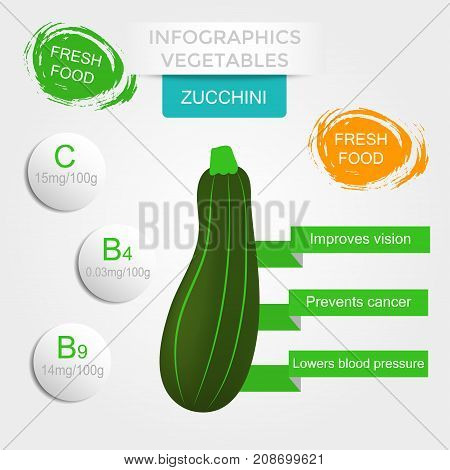Healthy vegetables infographics with zucchini vitamins and minerals. Quality vector illustration about diet eco food benefits of vegan and nutrition concept.