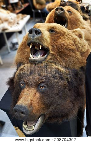 The head stuffed bears hunting trophy closeup
