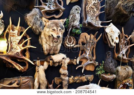 The wall with a the hunting trophy