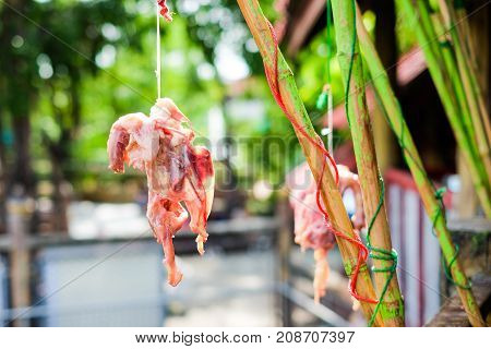Red meat chicken skeleton hang on green bamboo for animal feed (crocodile tiger lion vulture hawk and wolf) for background or texture - retail products concept.