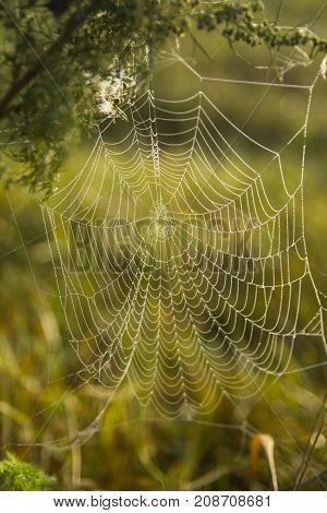 Morning dew on a spiderweb dangling on a weed