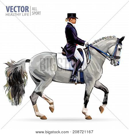 Equestrian sport. Horsewoman jockey in uniform riding horse outdoors. Dressage. Isolated on white background. Jockey on horse. Bay horse. Vector illustration