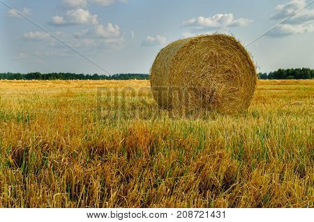 Hay Bale. Agriculture Field With Sky