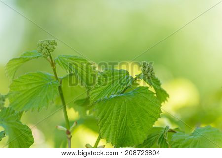 Green Leaves with Blurred Nature Background on a sunny day