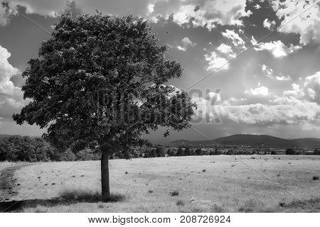 Minimalistic Landscape tree on Hayfield monochrome in summer