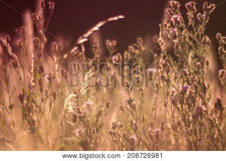 Soft focus meadows an grass and meadows