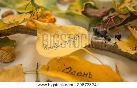 Autumn decoraion  leafs berries and hazelnuts clothes