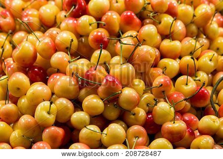 Rainier Cherries at Fruit Stand in Public Market Closeup
