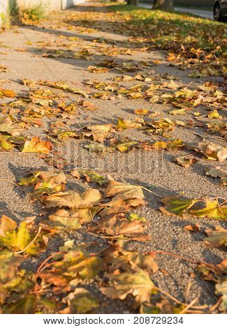 Autumn leafs on sidewalk walkway in September