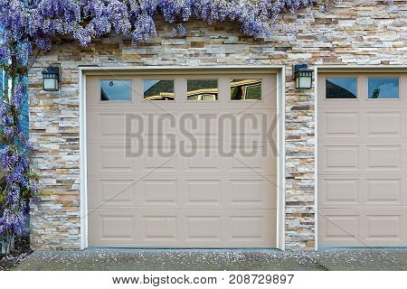 Wisteria flowers in full bloom by house front garage doors in Spring season