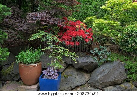 Lush garden backyard landscaping with trees shrubs plants pots rocks lantern in Spring Season