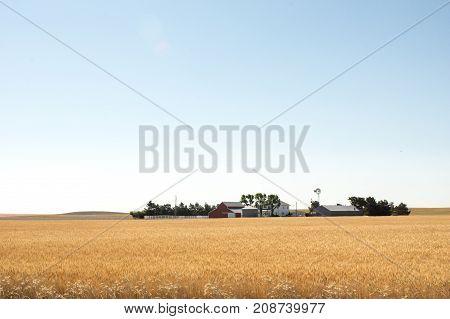 Grain Fields Of The West