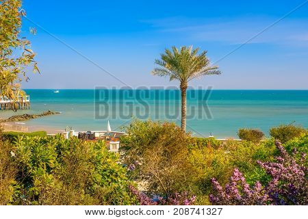 MESSILA, KUWAIT - SEPTEMBER 3, 2015 - A palm tree in front of The Gulf Sea on September 3, 2015, in Kuwait