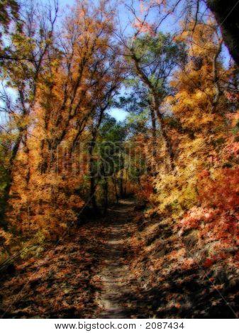 Autumn Trail Glow